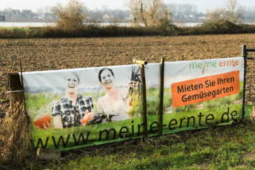 meine ernte in Düsseldorf Volmerswerth, Urban Gardening Düsseldorf, gärtnern in Düsseldorf, Feld in Düsseldorf, Gemüseanbau Düsseldorf